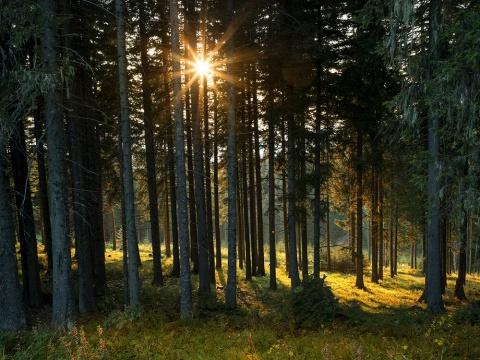 Die neue Sehnsucht nach dem Wald